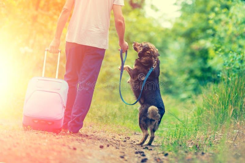 一个人走与沿乡下公路的一条狗 免版税库存照片
