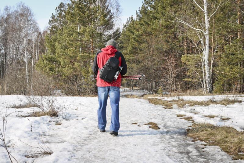 一个人通过森林在早期的春天走有照片背包和迁徙的棍子的 库存照片