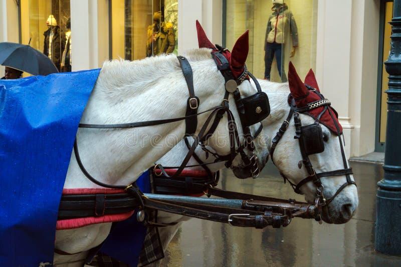 一个传统支架,维也纳,奥地利的两马头 免版税图库摄影