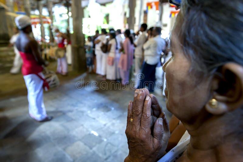 一个佛教夫人在康提,斯里兰卡提供在神圣的牙遗物的寺庙的里面祷告 免版税图库摄影