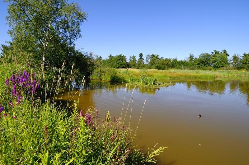 一个候鸟圣所的一个湖 免版税库存图片
