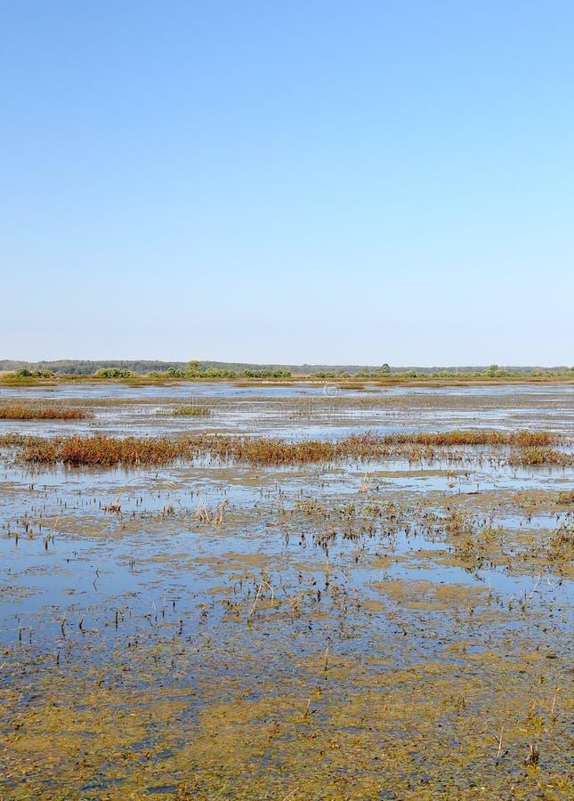 一个全国野生生物保护区的沼泽 图库摄影
