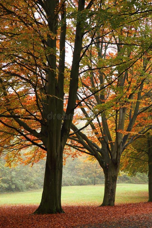 一个公园在秋天 免版税库存图片