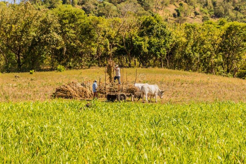 一个典型的看法在尼加拉瓜 免版税图库摄影