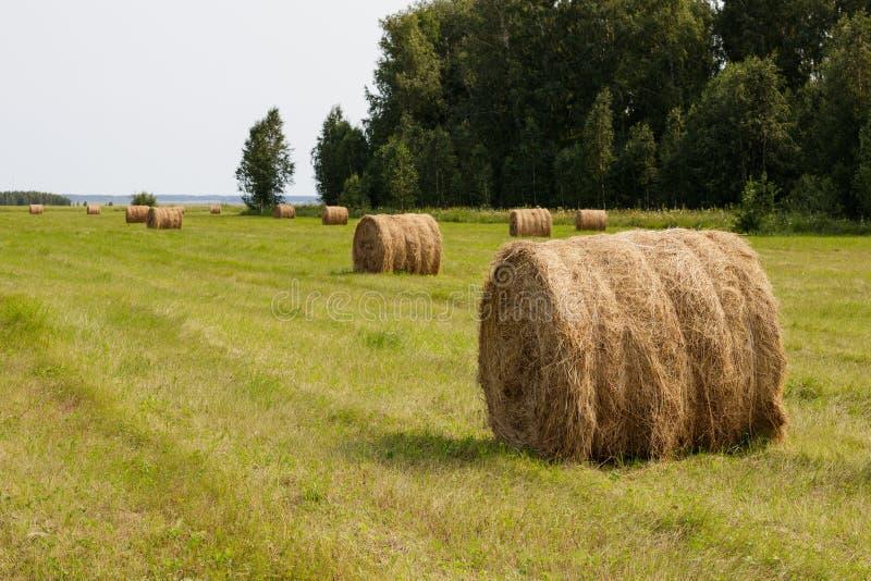 一个农业领域的滚动的干草堆 ?? 库存照片