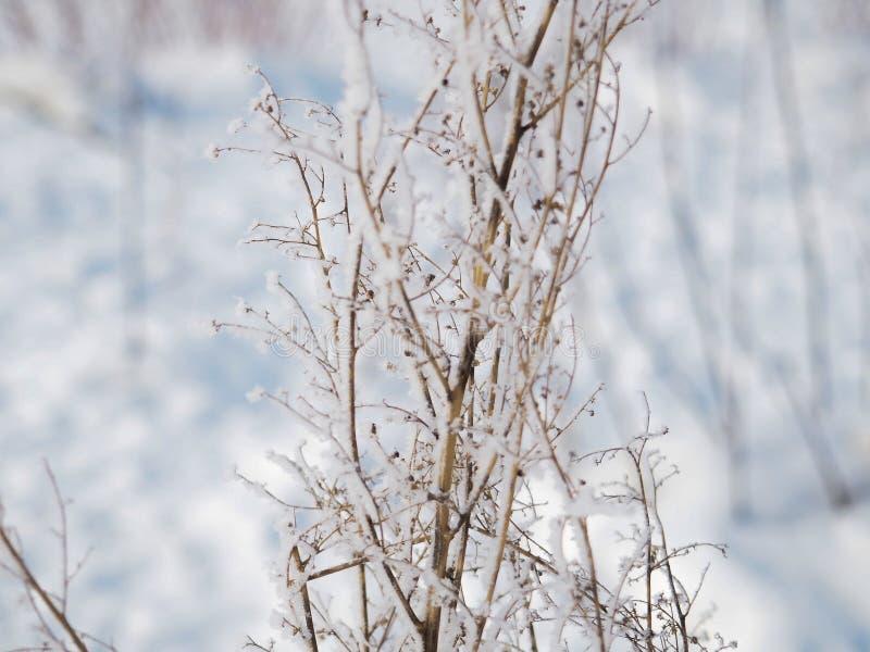 一个分支的弗罗斯特在一冷淡的天 库存图片