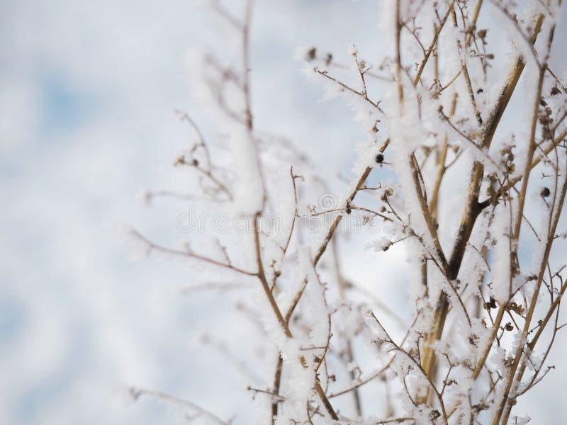 一个分支的弗罗斯特在一冷淡的天 库存照片