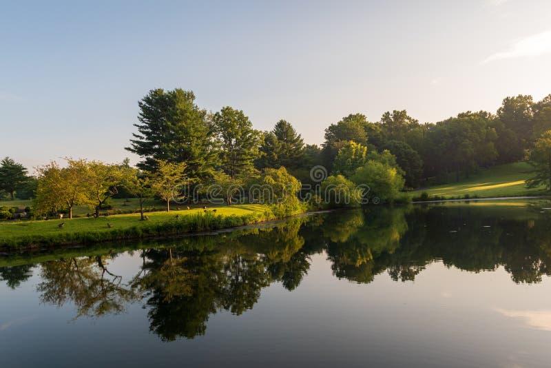 一个反射的池塘在公园 库存照片