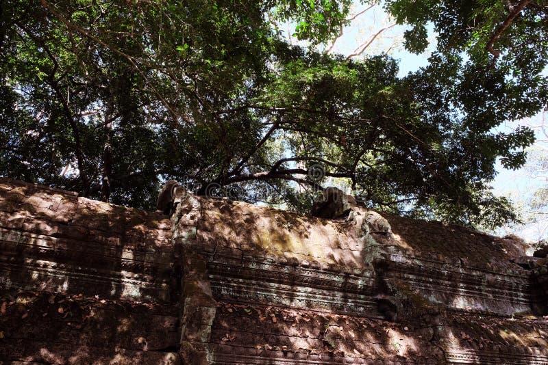 一个古老大厦的屋顶的片段 树的厚实的冠 免版税图库摄影
