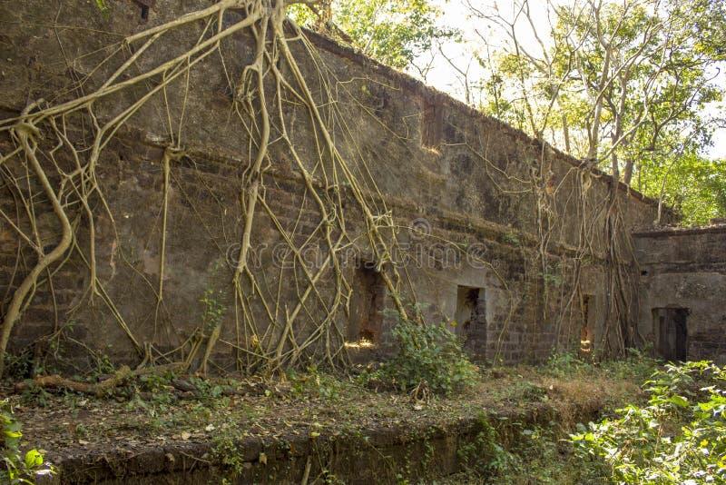 一个古老被放弃的堡垒的深堑侧壁长满与印度榕树和绿色密林 库存照片