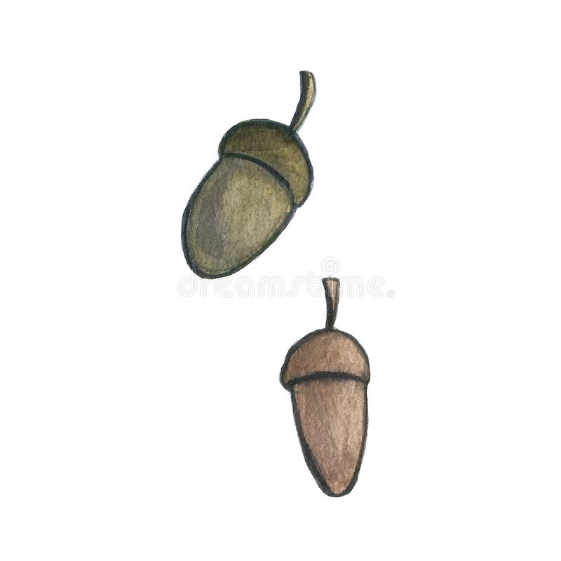 一个叶子橡子蘑菇的手拉的水彩例证在白色背景的 秋天秋天天气 ?? 库存例证