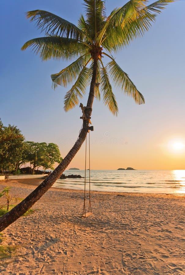 一个在日落的海滩和摇摆的看法与棕榈树的 库存照片