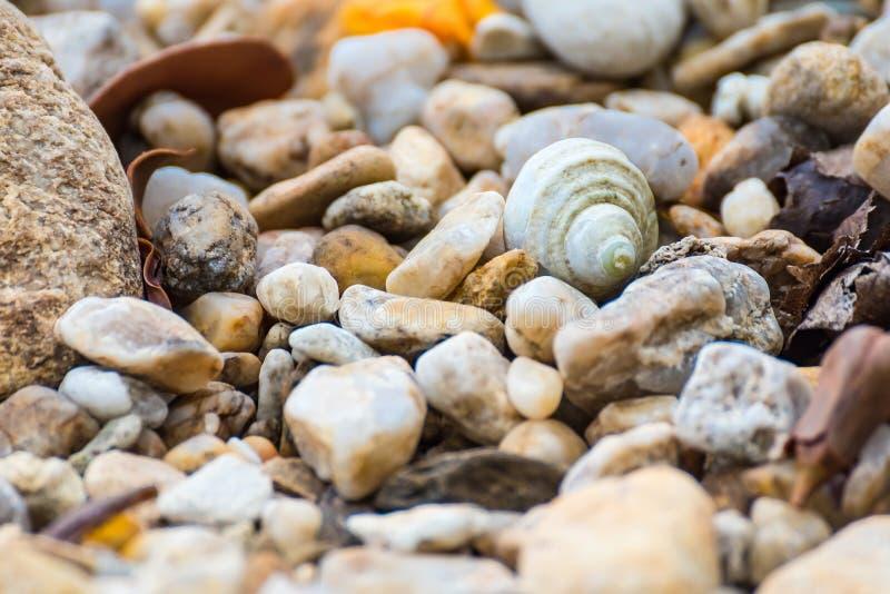 一个在许多小圆的贝壳顶部的大贝壳谎言 ?? 库存照片