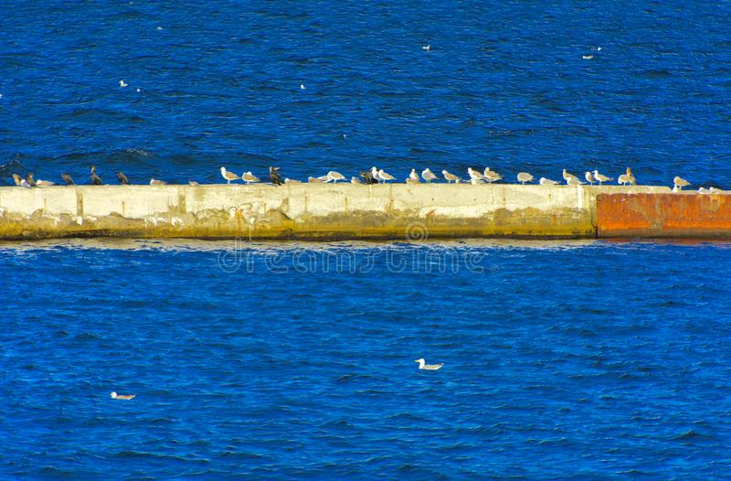 一个大小组海鸥坐一个具体防堤反对 库存照片