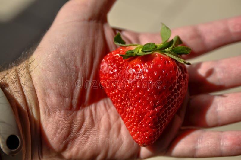 一个大明亮的红色草莓 免版税库存照片