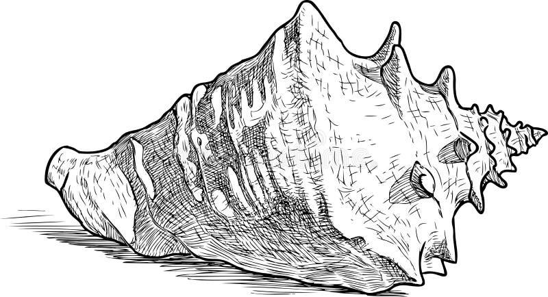 一个大海海扇壳的剪影 库存例证