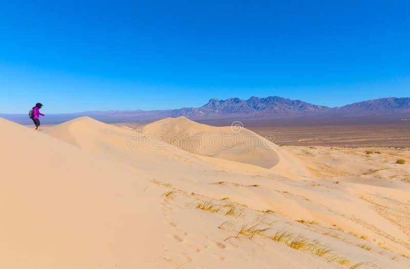 一个女性徒步旅行者在足迹做下降对沙丘的底部在莫哈韦沙漠蜜饯在一个有风早晨 免版税库存照片