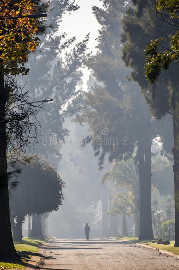 一个孤立图步行沿着向下树被排行的街道 库存图片