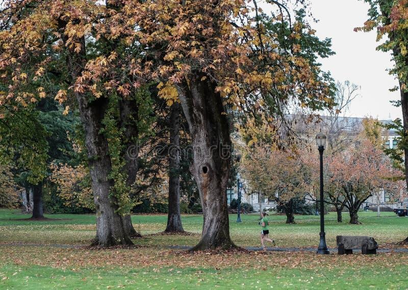 一个孤零零妇女赛跑者通过秋季更低的校园跑步在或 库存图片