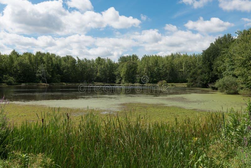 一个安静的池塘在森林 免版税库存照片