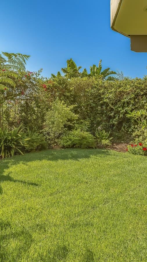 一个家的垂直的繁茂花园有充满活力的绿色叶子和五颜六色的开花植物的 免版税库存照片