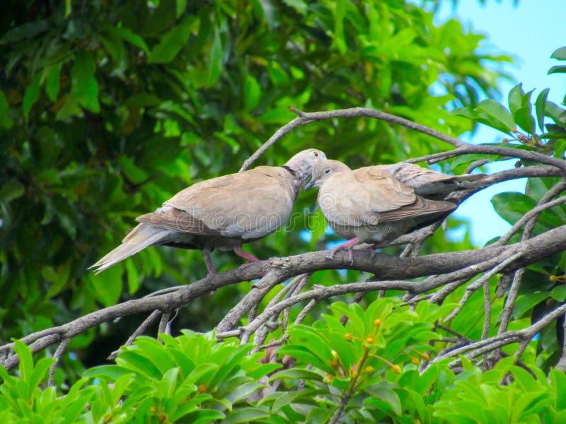 一个对在树的浪漫鸟 免版税库存图片