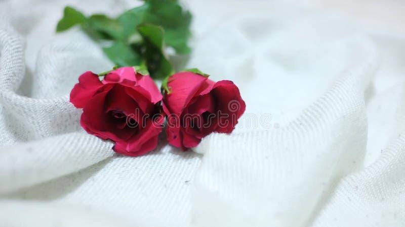 一个对在白色起皱纹的床单的红色玫瑰在卧室 免版税图库摄影