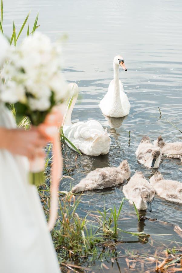 一个对有白玫瑰花束的新婚佳偶在湖附近坐 天鹅游泳 库存图片