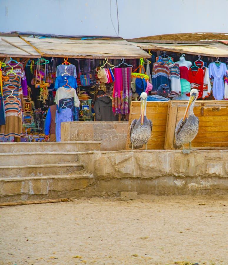 一个对秘鲁鹈鹕在旅游摊位前面摆在 免版税库存照片