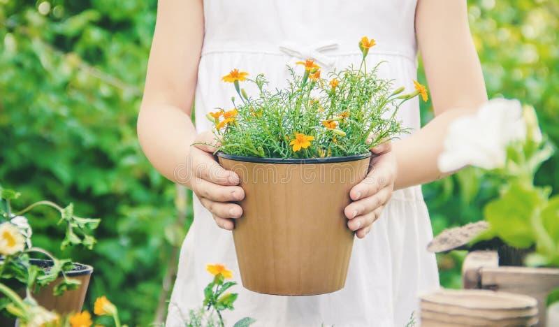 一个小女孩种植花 年轻花匠 选择聚焦 库存图片