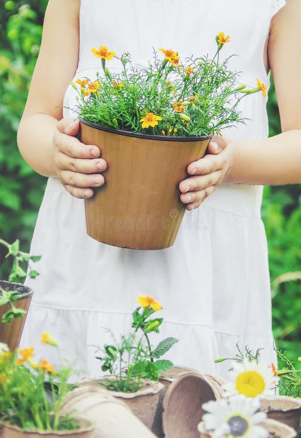一个小女孩种植花 年轻花匠 选择聚焦 免版税库存照片