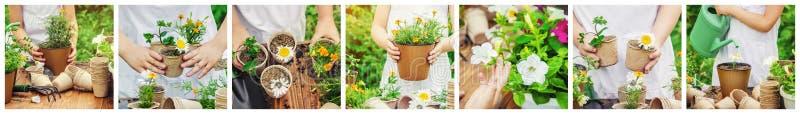 一个小女孩种植花 年轻花匠 库存图片