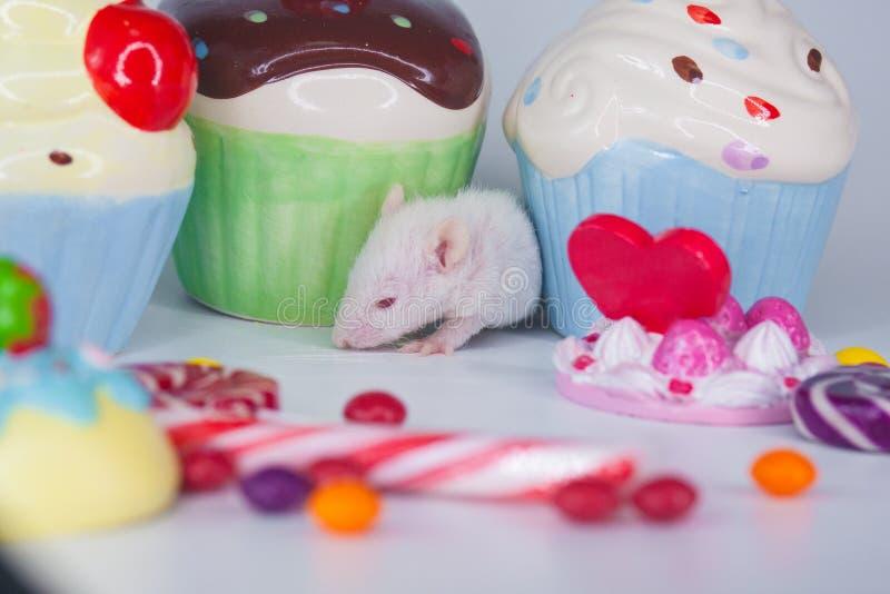 一个小孩子的假日的概念 一点与五颜六色的甜点的老鼠 图库摄影