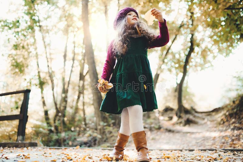 一个小小孩女孩身分的一个低角度视图在秋天自然的森林里 免版税库存照片