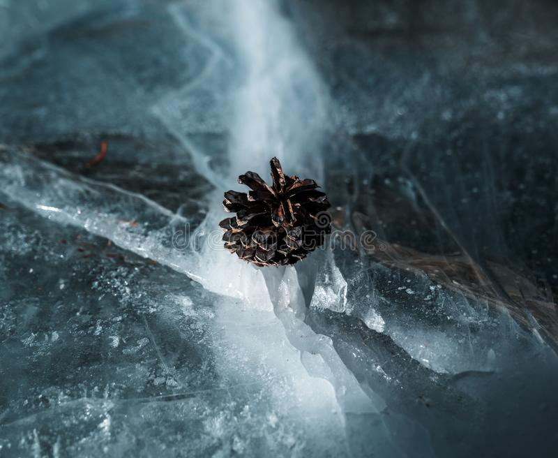一个小杉木锥体舒适地基于冰裂缝在一个冻湖的 库存照片