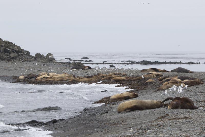 一个小海岛的桑迪岸在的安静的海洋的谎言 免版税库存照片