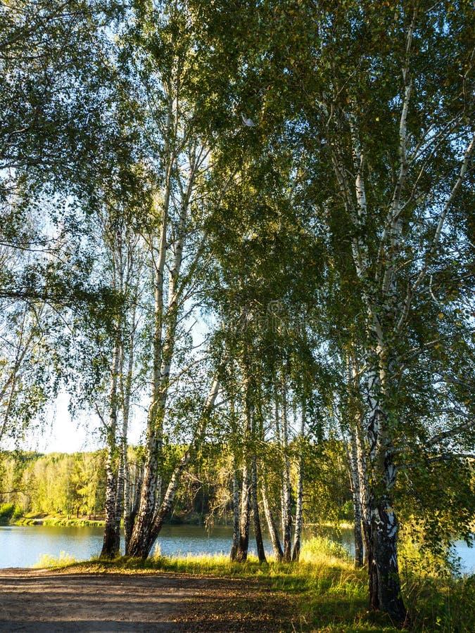 一个小湖的美丽的景色由绿色树渐近了秋天多云晚上 免版税库存图片
