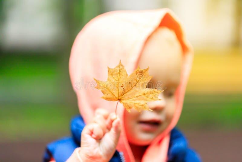 一个小男孩在公园在他的手上走并且拿着一片黄色枫叶 库存照片