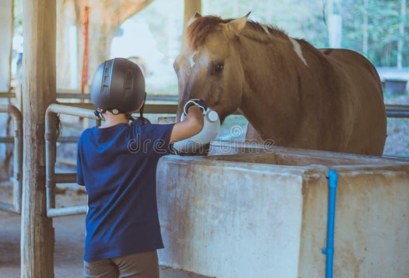一个小男孩照顾他的马 免版税图库摄影