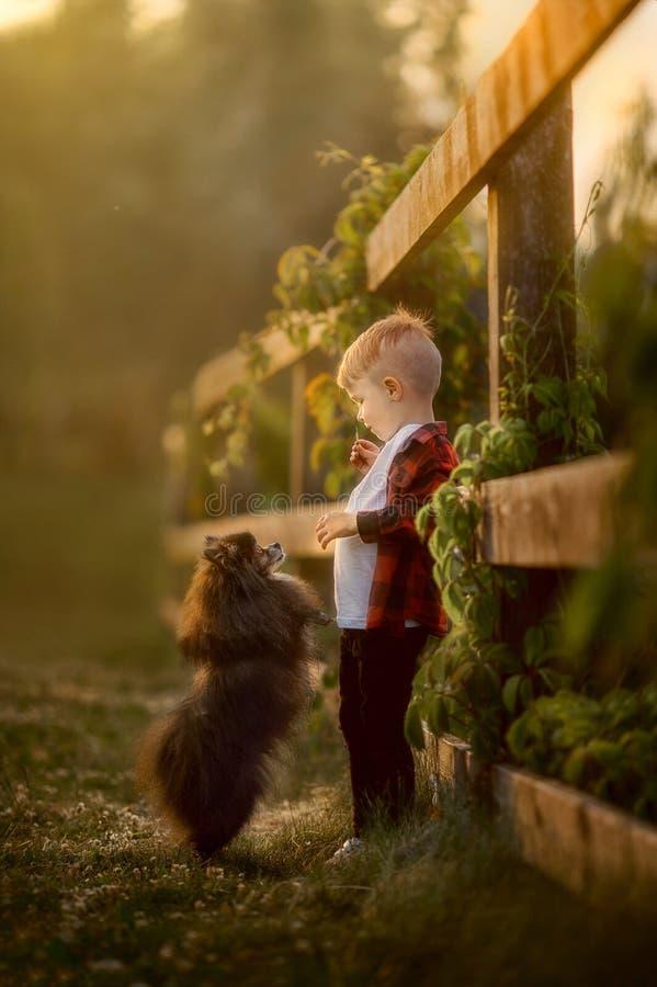 一个小男孩的画象有小狗的在公园 免版税库存图片