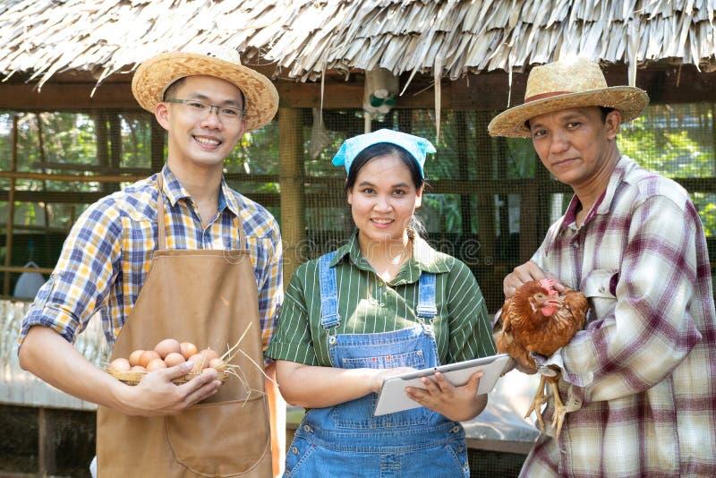 一个小组农夫与片剂设备站立一起运载鸡和鸡蛋, 免版税库存照片