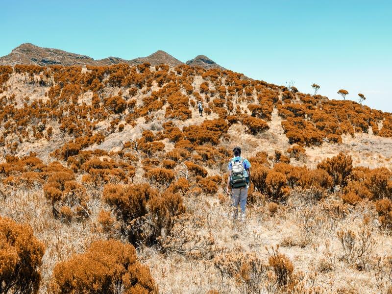 一个小组反对山背景的远足者在大象小山, Aberdare排列,肯尼亚 免版税库存图片