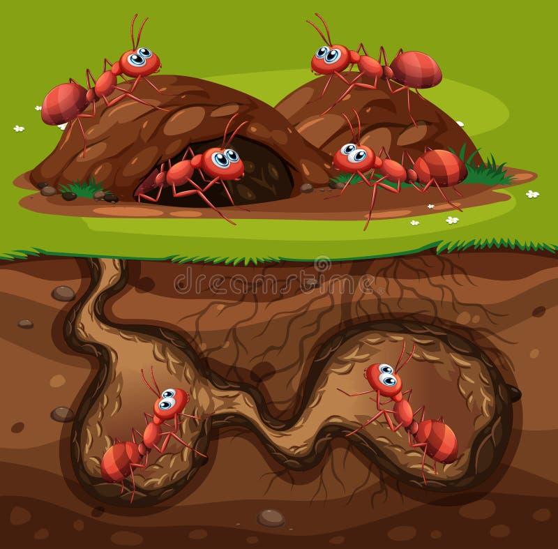 一个小组在孔的工作的蚂蚁 皇族释放例证