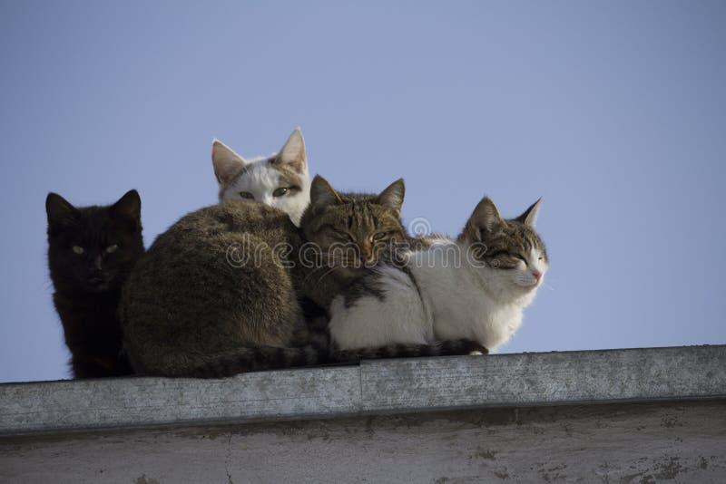 一个小组在屋顶看看的多彩多姿的猫照相机 免版税图库摄影