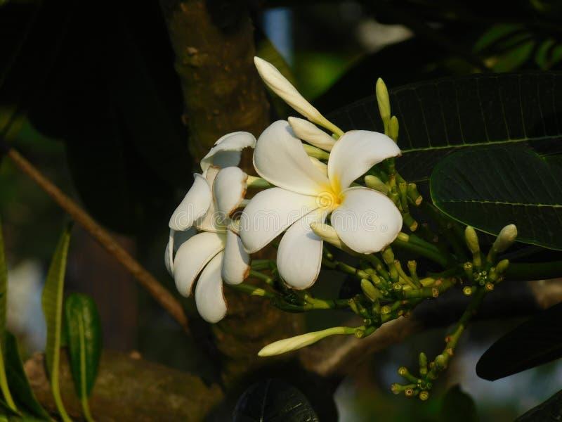 一个小组的一张美丽的照片白花 库存图片