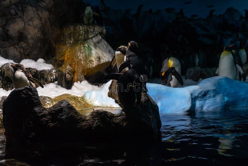 一个小组皇企鹅Aptenodytes forsteri 库存照片
