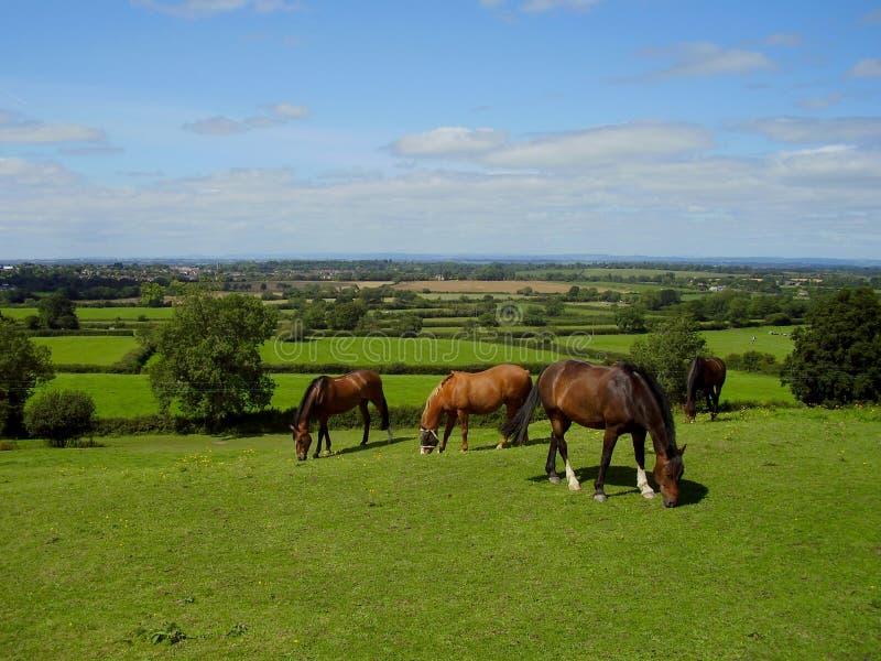 一个小组马吃草甜绿草在老Sodbury 免版税图库摄影