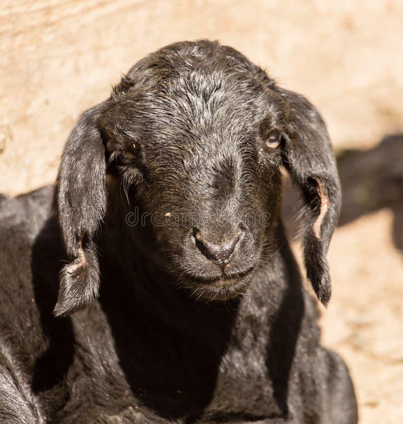 一个小黑孩子的画象在农场的 免版税库存图片