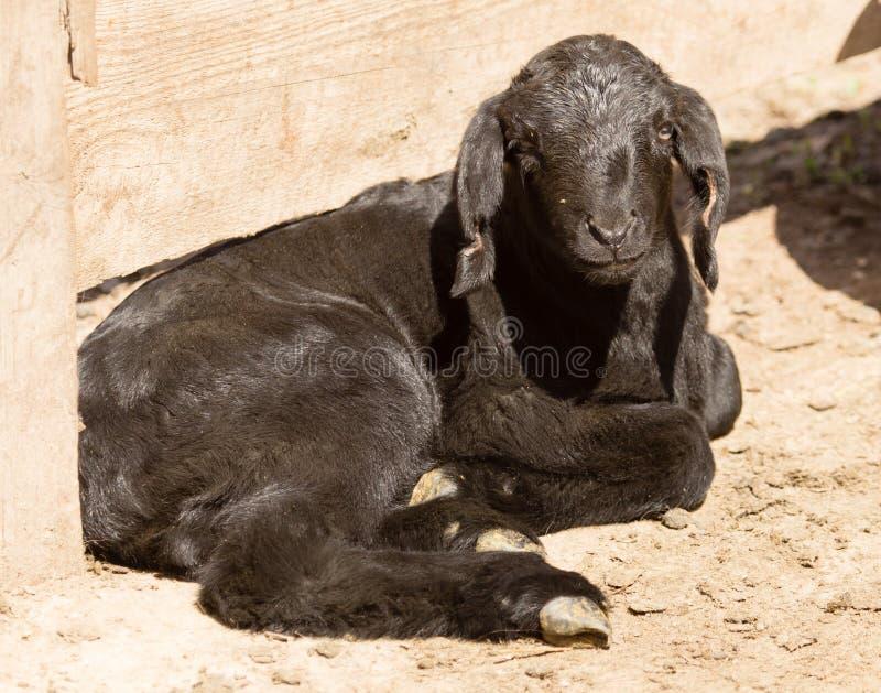 一个小黑孩子的画象在农场的 库存图片