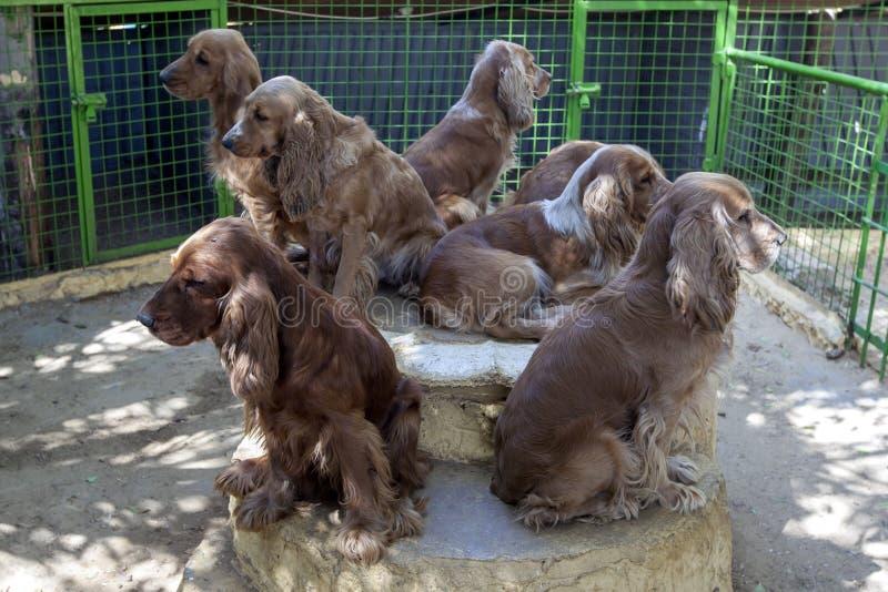 一个小组猎犬狗在埃及 库存图片